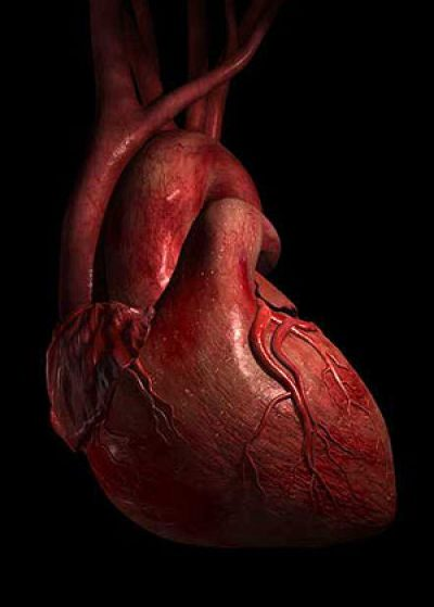 stress-heart-disease